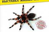Уникальную коллекцию живых пауков показывают в барнаульском музее «Город»