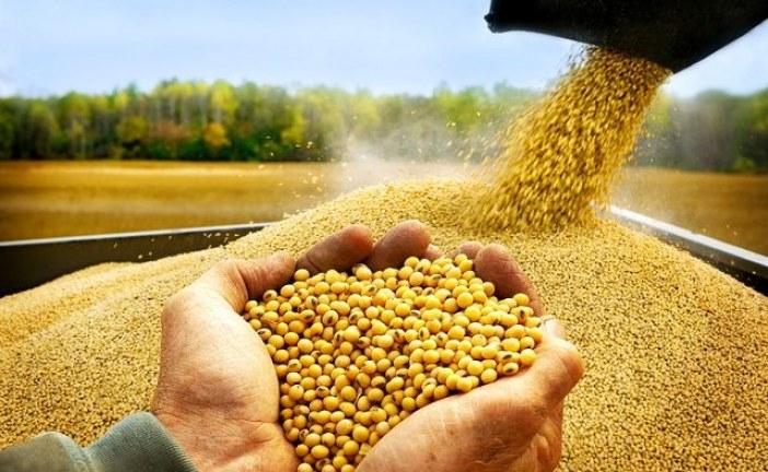 В крае в следующем году районируют новый сорт пшеницы