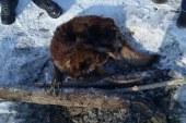 Рыбаки на Оби в Барнауле спасли примёрзшую ко льду собаку